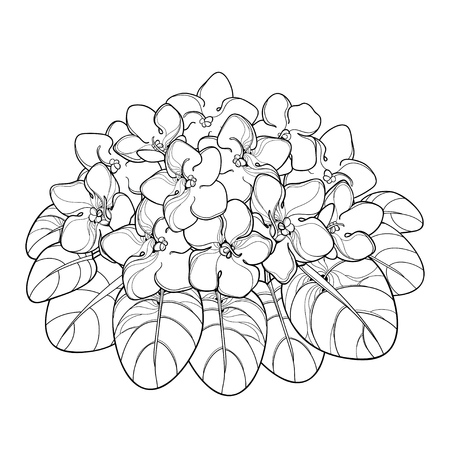 Bouquet with outline Saintpaulia or African violet flower and leaf in black isolated on white background. Viola flower in contour style for indoor floriculture, summer design and coloring book.