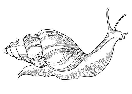 Drawing of Achatina snail. Stock Vector - 87739134