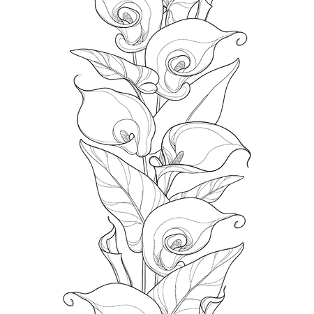 Seamless pattern with outline Calla lily flower or Zantedeschia. Flower, bud and leaves in black on the white background. Floral pattern in contour style for summer design and coloring book.