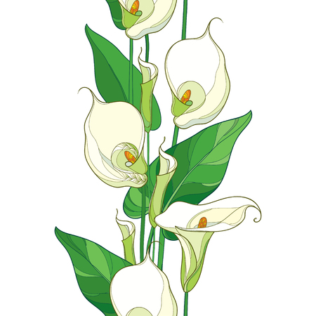 Seamless pattern with outline Calla lily flower or Zantedeschia. Pastel flower, bud and green leaves on the white background. Floral pattern in contour style with calla for summer design.