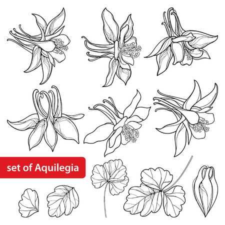 Set with outline flowers for coloring book.