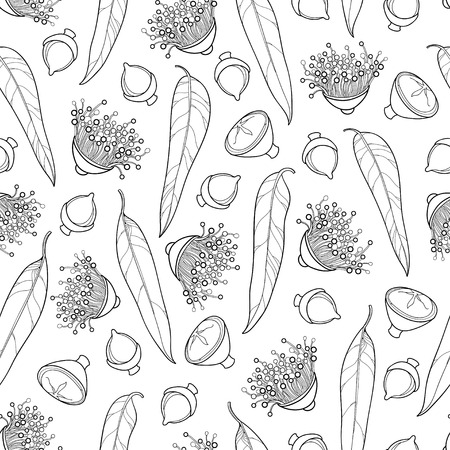 Sich wiederholendes Muster mit Entwurf Eukalyptus globulus oder tasmanischem blauem Gummi, Frucht, Blume und Blatt im Schwarzen auf dem weißen Hintergrund, Muster mit Eukalyptus für Sommerdesign oder Malbuch. Standard-Bild - 91311587