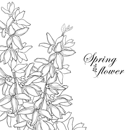 Bunch with outline Forsythia flower, branch, leaves in black isolated on white background. Corner composition of garden plant Forsythia in contour style for spring design and coloring book.