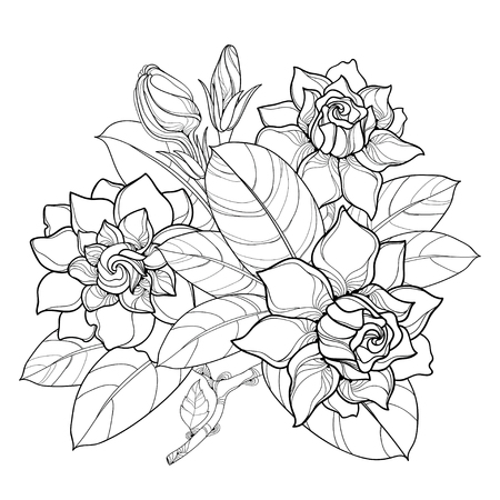 Outline Gardenia flower bunch, bud and ornate leaves in black isolated on white background. Bouquet with tropical fragrant plant Gardenia in contour style for summer design and coloring book. Illustration