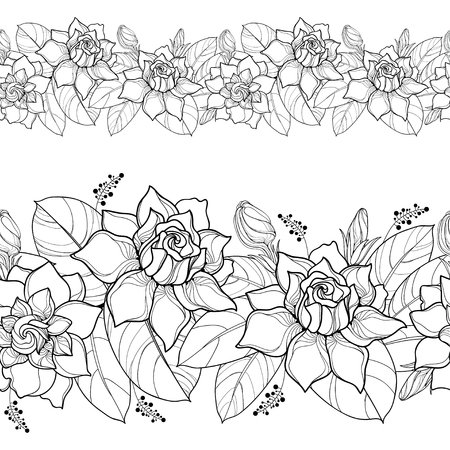 Seamless pattern with outline Gardenia. Ornate flower, bud and leaves in black on the white background. Floral border with Gardenia in contour style for summer design and coloring book. Ilustração