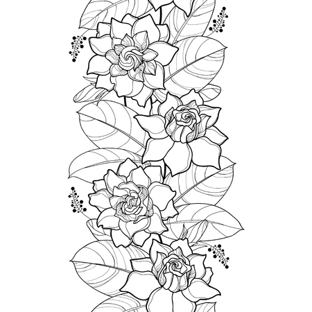 Pattern with outline Gardenia.