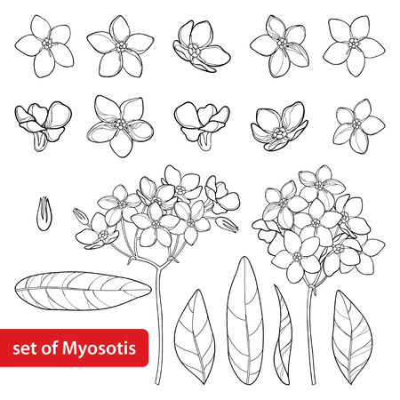 Set with outline Forget me not or Myosotis flower, bud, leaves and bunch in black isolated on white background. Wild plant Forget me not in contour style for spring design and coloring book.