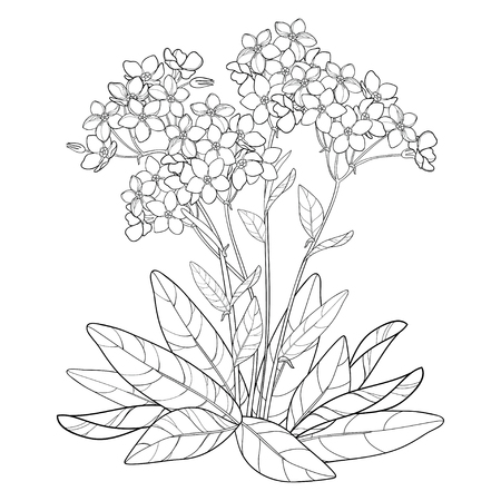 Bouquet with outline Forget me not or Myosotis flower, bunch, bud and leaves in black isolated on white background. Wildflower Forget me not in contour style for spring design or coloring book.