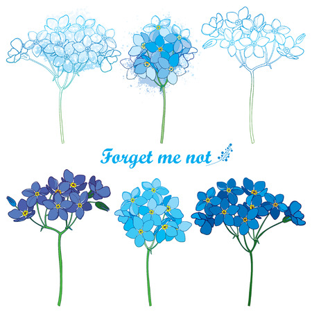 Set with outline Forget me not or Myosotis flower bunch in pastel blue isolated on white background. Wild plant Forget me not in contour style for spring design or romantic decor.