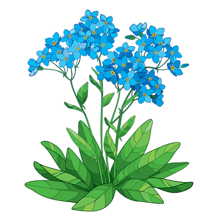 Bouquet with outline Forget me not or Myosotis flower.