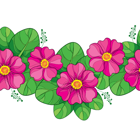 Seamless pattern with outline pink Primula or Primrose flower and green leaves on the white background. Horizontal seamless border with pink Primula in contour style for spring design. Ilustracja