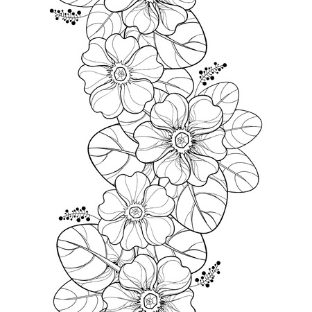 Seamless pattern with outline Primula or Primrose flower and leaves in black on the white background. Vertical border with Primula in contour style for spring design and coloring book.