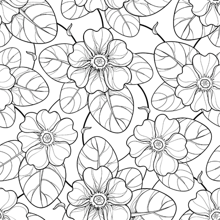 Seamless pattern with outline Primula or Primrose flower and leaf in black on the white background. Elegance floral pattern with Primula in contour style for spring design and coloring book. Ilustrace