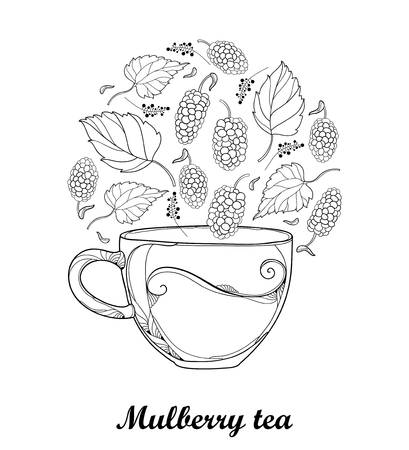 Contour transparency cup of Mulberry or Morus herbal tea isolated on white background. Çizim