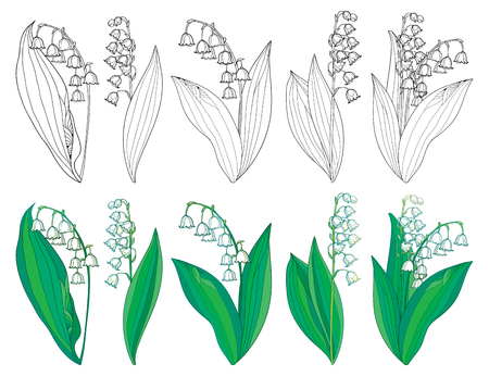 Set with outline Lily of the valley or Convallaria flowers and leaves. Stock Illustratie