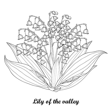 Bouquet with outline Lily of the valley or Convallaria flower and leaf.