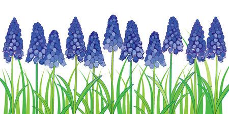 Bordure horizontale avec contour bleu muscari ou fleur de jacinthe de raisin et feuillage vert isolé sur fond blanc. Modèle floral orné dans le style de contour pour la conception de printemps ou carte de voeux. Banque d'images - 92925278