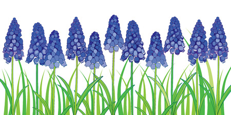 Horizontal border with outline blue muscari or grape hyacinth flower and green foliage isolated on white background. Ornate floral template in contour style for spring design or greeting card. Stock Illustratie