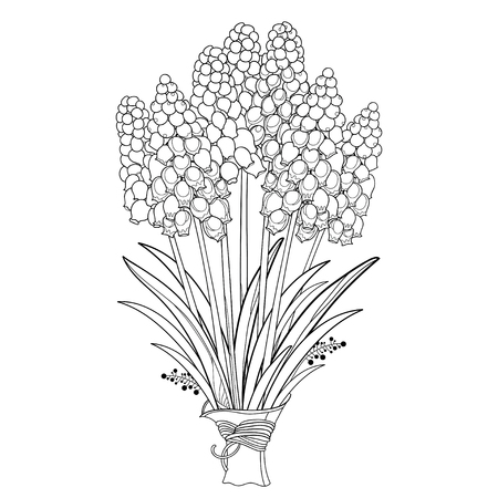 Bouquet with outline muscari or grape hyacinth flowers and leaves in black isolated on white background. Bunch with ornate muscari in contour style for spring design or coloring book.