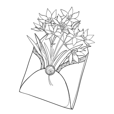 Bouquet with outline Ornithogalum or Star-of-Bethlehem isolated on white. Perennial bulbous plant in contour style for spring design or coloring book.