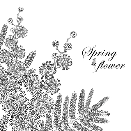 Branch of outline Mimosa or Acacia dealbata or silver wattle flower and leaves in black isolated on white background. Blossom Mimosa bunch in contour style for spring design or coloring book. Иллюстрация
