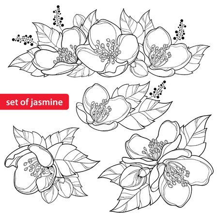 Set with outline Jasmine flower bunch, bud and ornate leaves in black isolated on white background. Ornate floral with Jasmine flower in contour style for spring design or coloring book. Illustration