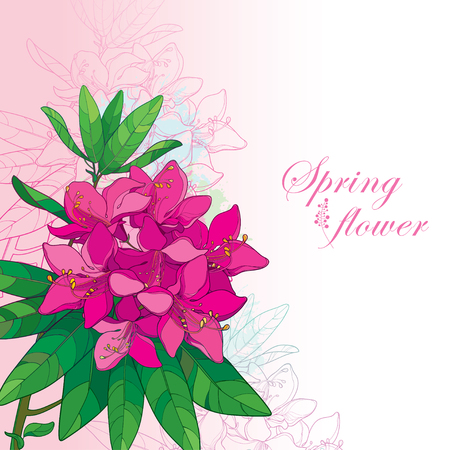 Corner bouquet with outline pink Rhododendron or Alpine rose flower on the pastel background. Bunch with evergreen mountain flowers and leaves in contour style for greeting summer design.
