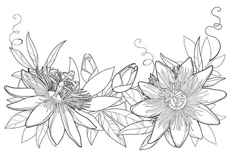Guirnalda con contorno tropical Passiflora o flores de la pasión, brote, hojas y zarcillo aislado sobre fondo blanco. Elementos florales adornados en estilo de contorno para el diseño de verano y libro para colorear.