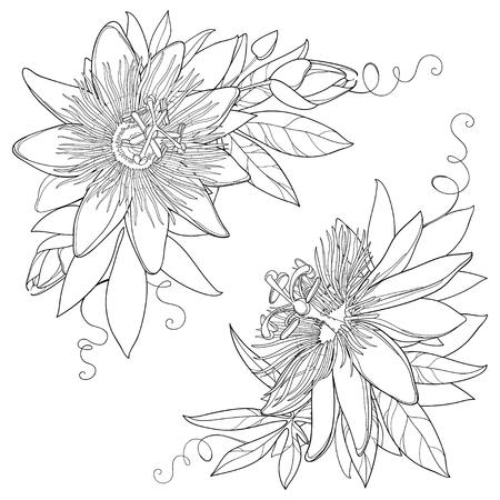 Bouquet à contour tropical Passiflora ou Fleur de la passion. Fleurs ornées exotiques, bourgeon et feuille en noir isolé sur fond blanc. Flore de style de contour pour la conception de l'été et cahier de coloriage.