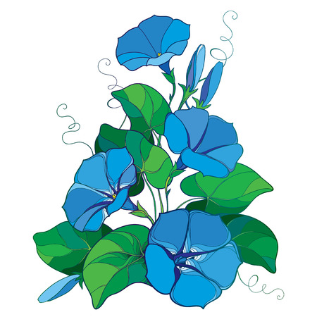 Bouquet with outline Ipomoea or Morning glory flower bell in pastel blue, green leaf and bud isolated on white background. Perennial climbing plant in contour style for summer design. Illustration