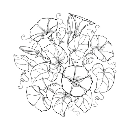 Round bouquet with outline Ipomoea or Morning glory flower, leaf and bud in black isolated on white background. Perennial climbing plant in contour style for summer design and coloring book.