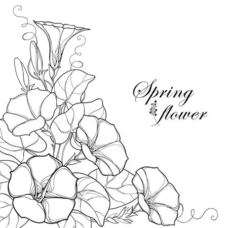 輪郭Ipomoeaまたは朝顔の花、白い背景に隔離された黒の葉と芽とコーナーブーケ。夏のデザインと塗り絵のための輪郭スタイルの多年生の登山植物。