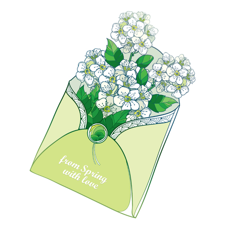 Bouquet with outline Spiraea or Spirea flower bouquet in an open-air business envelope in a pastel green isolated on white background. Blooming ornate Spiraea in contour style for greeting spring design.