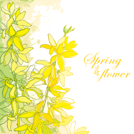 Bunch with outline Forsythia flower, branch, leaves in yellow isolated on textured background in pastel colors. Corner composition of garden plant. Forsythia in contour style for spring design. Illustration