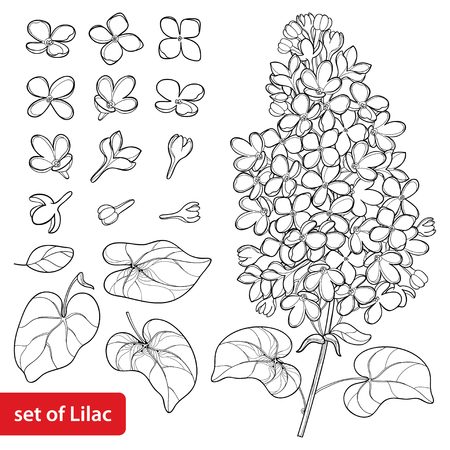 Set with outline Lilac or Syringa flower, ornate leaves and bunch in black isolated on white background. Blossoming garden plant Lilac in contour style for spring design and coloring book.