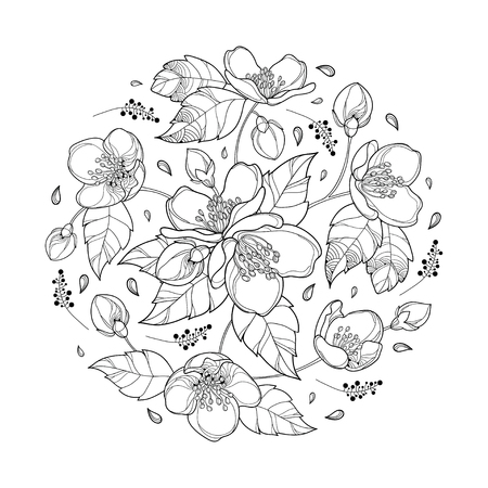 Round bouquet with outline Jasmine flower bunch, bud and ornate leaves in black isolated on white background. Floral with Jasmine flower in contour style for spring design or coloring book.