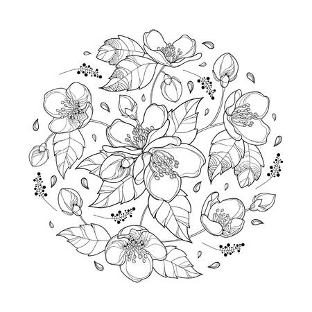 Ramo redondo con el manojo de la flor del jazmín del esquema, el brote y las hojas adornadas en negro aisladas en el fondo blanco. Floral con flor de jazmín en estilo de contorno para diseño de primavera o libro para colorear. Ilustración de vector