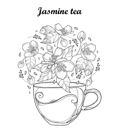 Transparency cup of Jasmine herbal tea isolated on white background. Outline flowers, bud and leaves in black and white in contour style. Floral elements for spring design and coloring book.