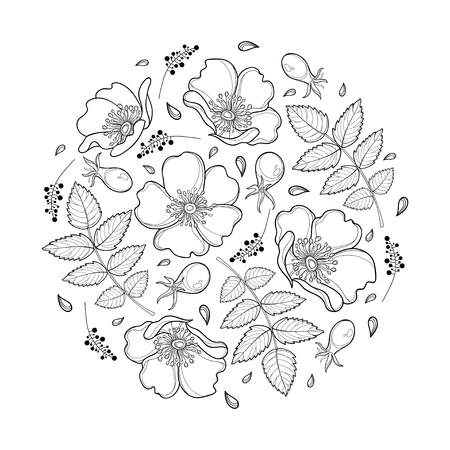 Round composition with outline Dog rose or Rosa canina, medicinal herb. Ornate flower, leaf and hip isolated on white background. Wild rose in contour for summer design and coloring book.