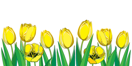 Border with outline yellow tulip flowers, bud and ornate green leaves isolated on white background. Ilustração