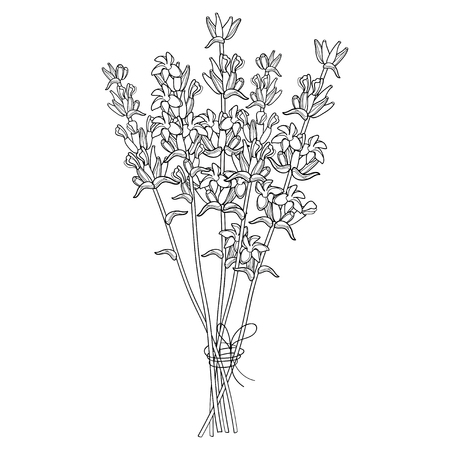Bouquet with outline Lavender flower bunch and bud in black isolated on white background. Ornate perfume Lavender herb in contour style for summer design and coloring book.