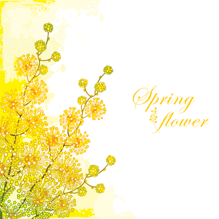 Corner bouquet of flower on the pastel yellow background. Blooming contour Mimosa flower bunch for greeting spring design.