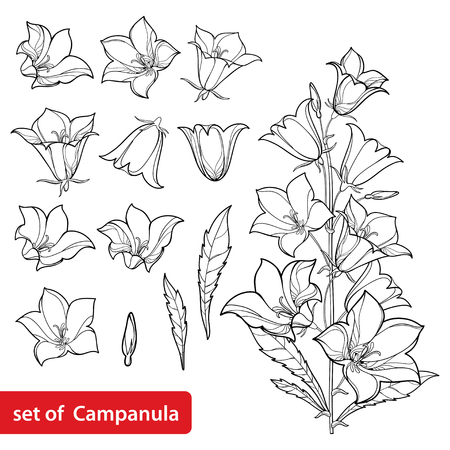 Set with outline flower bunch, leaves and bud in black isolated on white background. Perennial plant in contour style for summer design and coloring book.