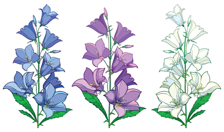 Set of bunch of flowers and bud in pastel blue, lilac and white isolated on white background.