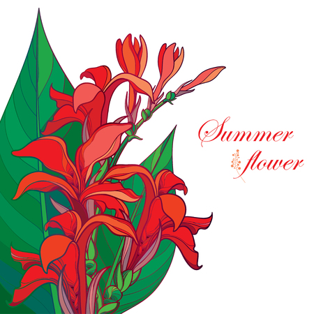 Corner bouquet of outline red Canna lily or Canna. Flower bunch, bud and leaf isolated on white background. Floral composition in contour style with ornate tropical flower for summer design. Illustration