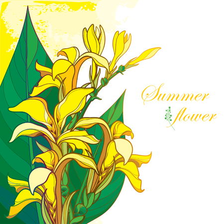 Bouquet of outline yellow Canna lily or Canna. Flower bunch, bud and leaf isolated on pastel background. Corner composition in contour style with ornate tropical flower for summer design.
