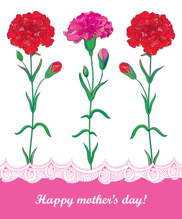 Greeting card for Mother's day with three red Carnation or Clove flowers and decorative lace in white and pink.