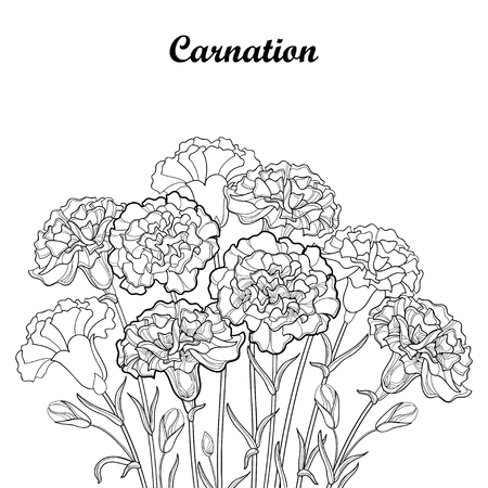 Bouquet with outline Carnation or Clove flower in black, bud and foliage isolated on white background.