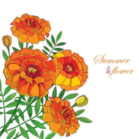 Corner bouquet with orange, bud and leaf isolated on white background. Illustration