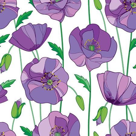 Seamless pattern with outline lilac Poppy flower, bud and green leaves on the white background. Vettoriali